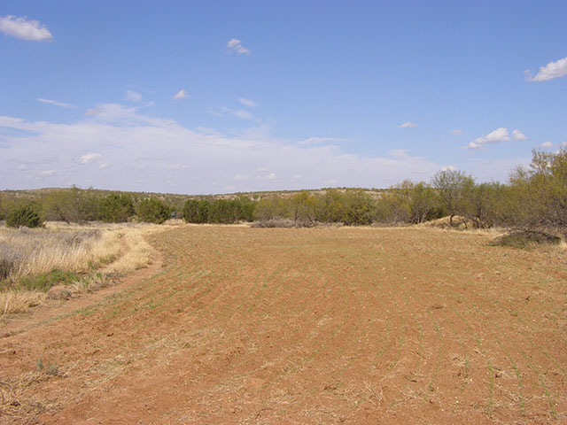 155 Acre Ranch